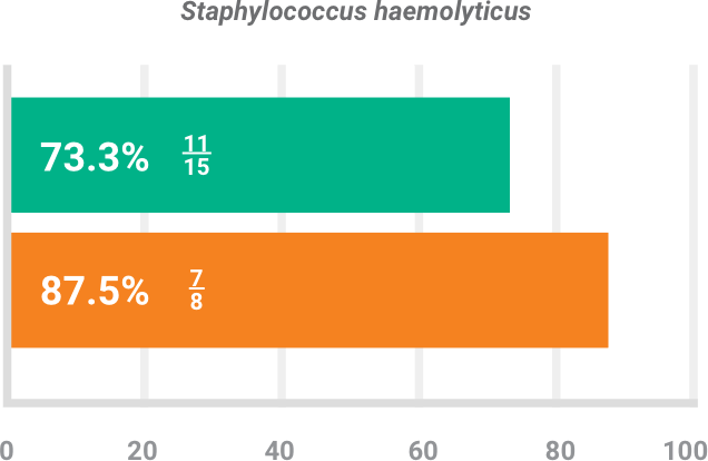 BAXDELA gram-positive pathogen Staphylococcus haemolyticus clinical response chart